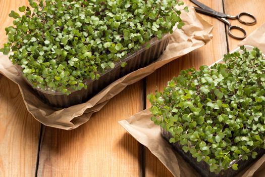 Broccoli and kale microgreens on a wooden table