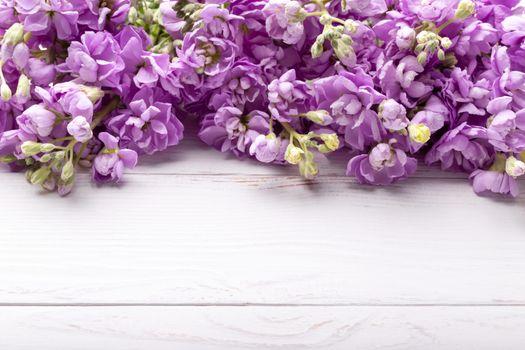 Spring Lilac mattiola flowers