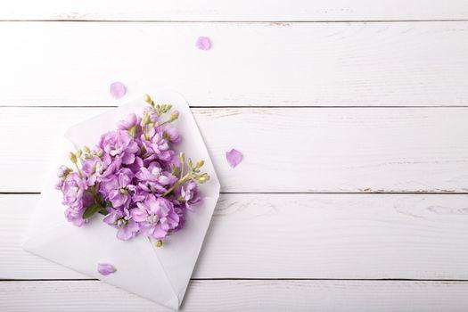 Lilac mattiola flowers