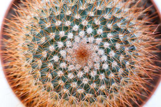 Macro shot of a cactus