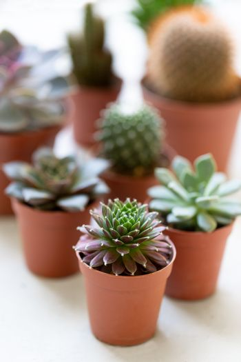 Small succulents and cactus