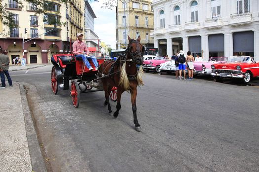 Horse and carriage on the streets of Havana