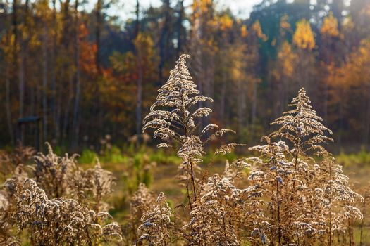 Backgrounds of different plants in the autumn forest. Bright colors of the nature of the autumn forest.