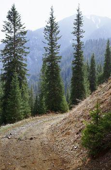 Natural parkland in Colorado mountains