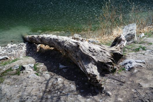 Dead fallen tree at the lake