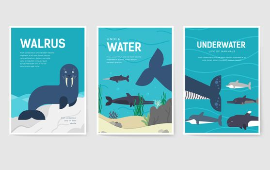 Set of Sea mammals pattern concept. Art animal, magazine, book, poster, abstract, banners, element. Vector fish in ocean life package greeting card or invitation brochure design