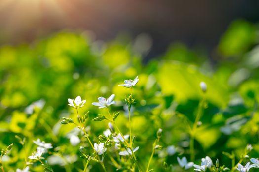 Fresh wildflower meadow