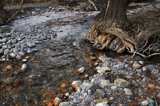 River bed with rocky stones and old tree. Kent, England