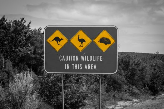 Black white and yellow accent of caution wildlife sign in Australia - artistic