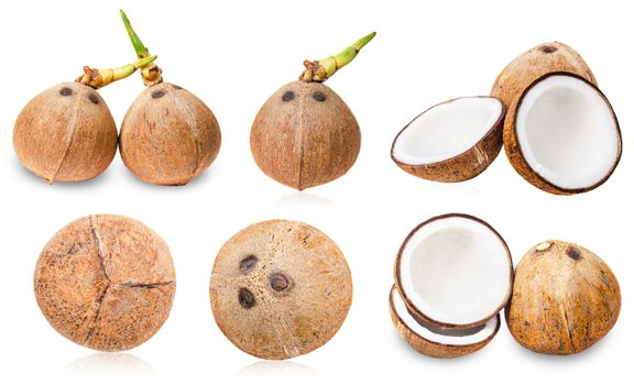 Collection of coconuts isolated.