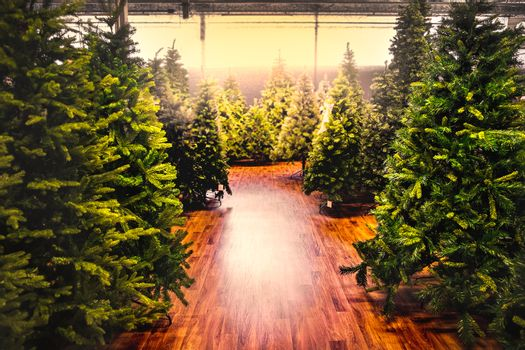 christmas trees store background sale yellow warm tone backlight gleam sunbeam shopping