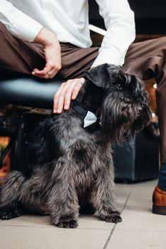 black terrier