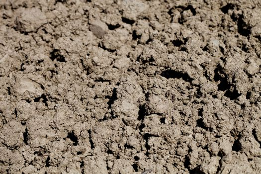 Soil prepared for cultivation.