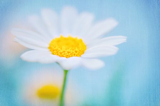 Beautiful textured background of a daisy flower