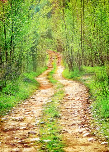 Pathway in secluded deciduous forest