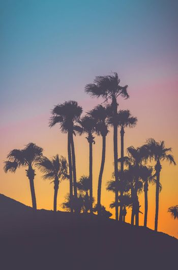 Retro Filtered Tropical Palm Trees Against A Vibrant Sunset With Copy Space Above And Below