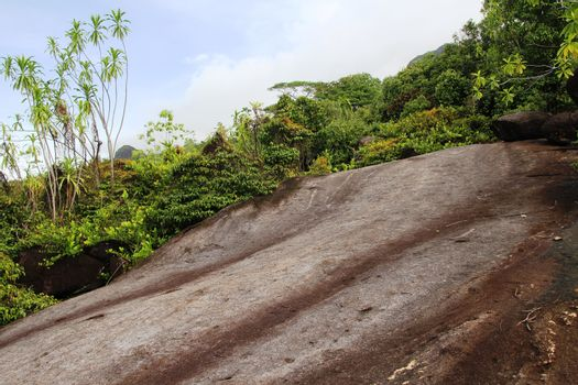 Green tropical trees on the mountain slopes.