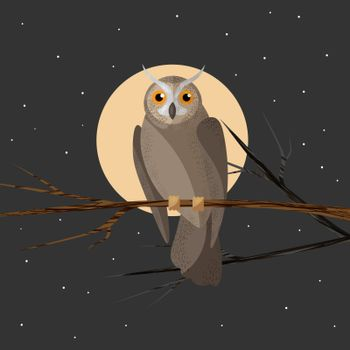 Wild forest feathered nocturnal predatory Owl of prey sitting on branch.