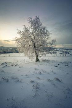 Single Tree in a solitude Winter Landscape