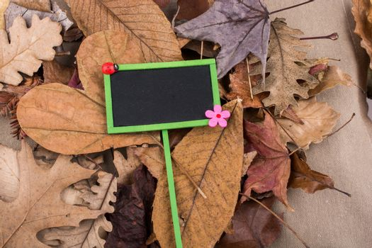 Noticeboard is placed on dry Autumn leaves