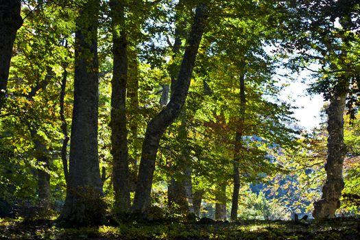Autumn italian forest.