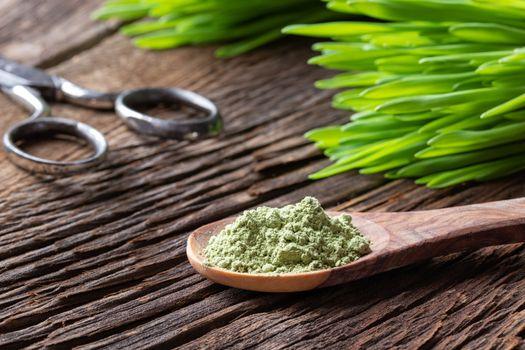 Barley grass powder on a spoon with fresh blades