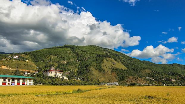 The grasslands of Thimpu and Tashichho Dzong in the background