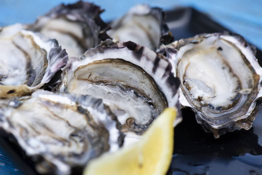 Closeup of large fresh shucked oysters with a blue background.