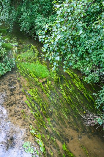 Reeds in a Stream