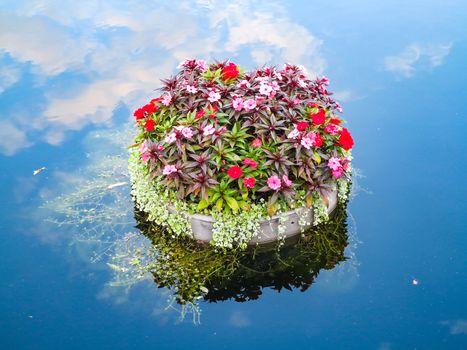 Floating Plants
