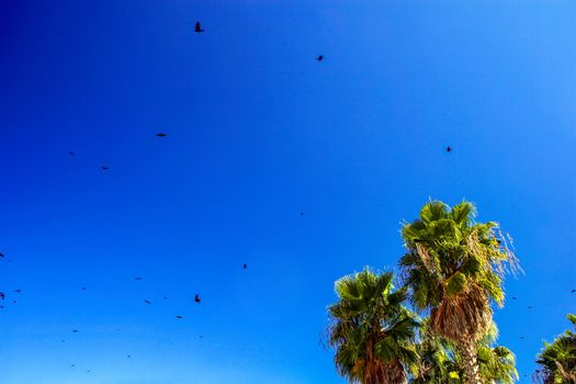 Seagulls and Palm Trees