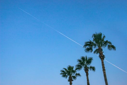 Palm Trees and Contrails
