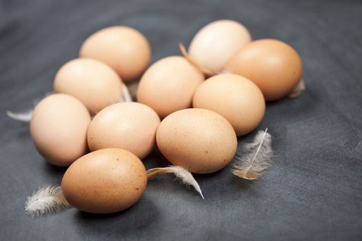 Farm chicken eggs and feathers