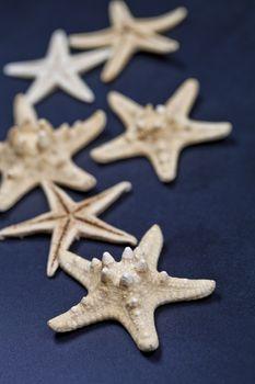 Starfish closeup on deep blue.