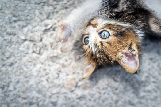 Nice kitty having fun outdoors