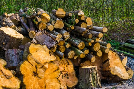 large pile of cut down tree trunks, stacked fire wood, natural background