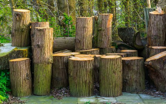 accumulation of wooden tree trunks, natural background, timbered wood