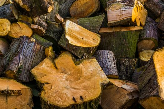pattern of cut wood logs, natural wooden background, pile of timbered wood