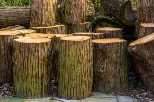 closeup of cut tree trunks, timbered wood, accumulation of fire wood