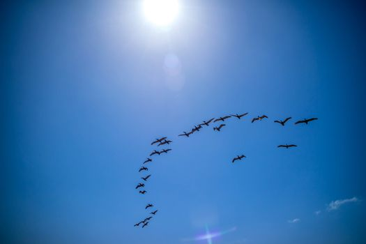 A noticeable bunch of birds spotted migrating together in South Padre Island, Texas