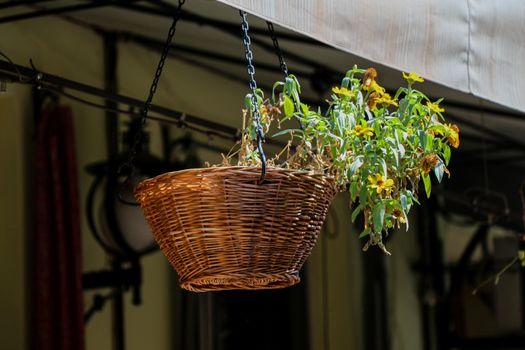 Beautiful flowers in flower basket hangin in a shop entrance
