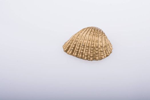 Little gold colored seashell on white background