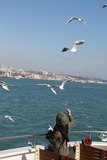 Seagulls are flying in sky over the sea waters