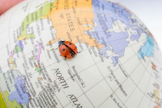 Ladybug walking on a little colorful model globe