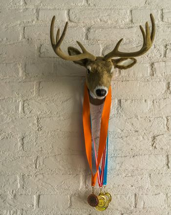 deer head with antlers hanging on a white brick wall, deer with sport medals around its neck