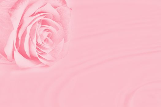 Rose lies on the surface of the water with easy ripples