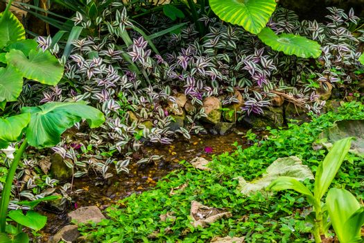 small brook with streaming water in a tropical garden, nature background