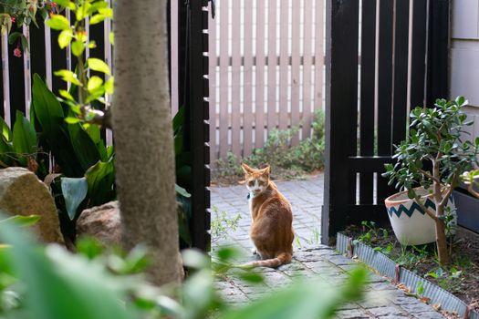 Ginger cat sitting in fence doorway looking at camera in garden