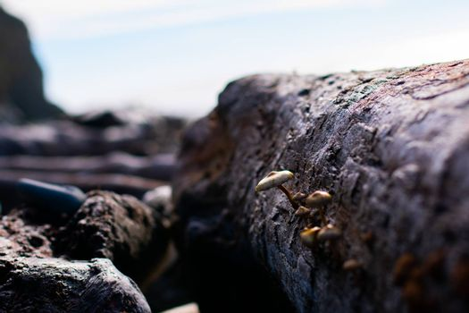Mushrooms growing out of a log on a beautiful sunny beach day