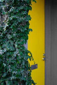 Secret yellow door tucked behind green ivy bush in the city